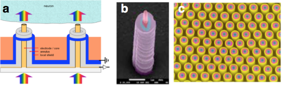 Diagram of nanocoaxial electrode architecture (A); false-color SEM of single (B) or arrays (C).